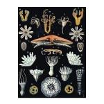 Porifera Coelenterata Platyhelminthes