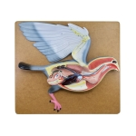 Pigeon Dissection Model